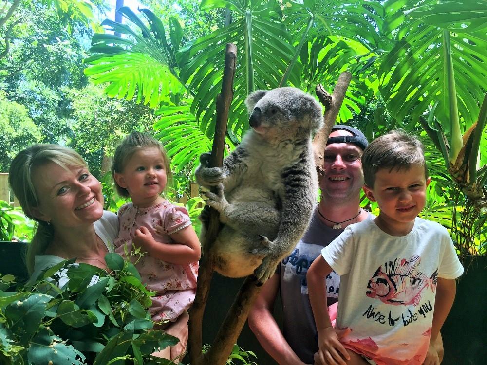 U koaly v Koala parku