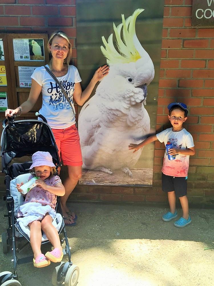 U kakadu v Koala parku
