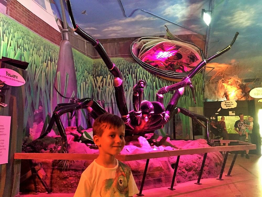 Expozice pavouků v Reptail parku